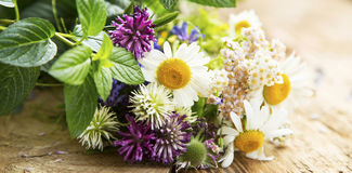 Healing Herbs Royalty Free Stock Photography
