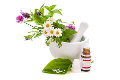 Healing herbs and amortar. Stock Image