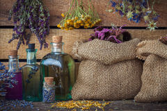 Healing herbs in bags, bunches of herbs and tincture bottles. Stock Image