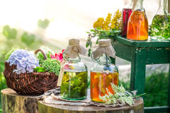 Healing herbs in bottles with herbs and alcohol. On old wooden stump Royalty Free Stock Photography