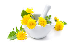 Healing herbs. Dandelion stock photo