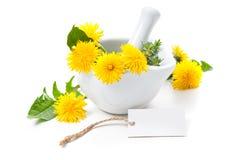 Healing herbs. Dandelion Stock Images