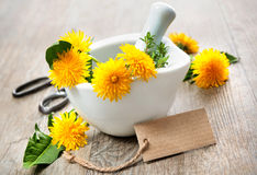 Healing herbs. Dandelion royalty free stock photography