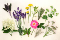 Healing Herbs and Flowers Royalty Free Stock Images