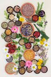 Healing Herbs and Flowers Royalty Free Stock Photography