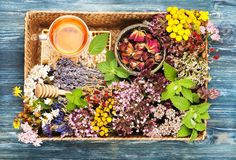 Healing herbs and flowers in a tray, honey and herbal tea. royalty free stock photography