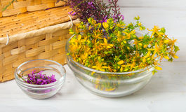Healing herbs Royalty Free Stock Photo