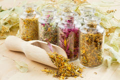 Healing herbs in glass bottles. Wooden scoop, herbal medicine Stock Photo