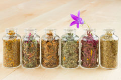 Healing herbs in glass bottles. Herbal medicine Royalty Free Stock Photos