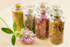 Healing herbs in glass bottles. Herbal medicine Royalty Free Stock Images