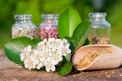 Healing herbs in glass bottles, herbal medicine Royalty Free Stock Photos