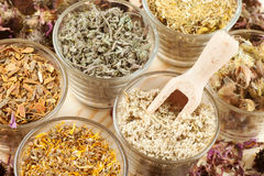 Healing herbs in glass cups, herbal medicine Royalty Free Stock Image