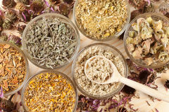 Healing herbs in glass cups, herbal medicine Royalty Free Stock Images