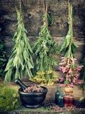 Healing herbs, herbal medicine Royalty Free Stock Photography