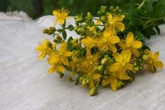Healing herbs Stock Images