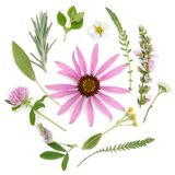 Healing herbs. Medicinal plants and flowers bouquet of echinacea, clover, yarrow, hyssop, sage, alfalfa, lavender, lemon balm. Strawberry stock images