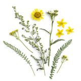 Healing herbs. Medicinal plants and flowers bouquet of wormwood, elecampane, yarrow, tansy, St. John`s wort.  stock images