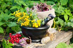 Healing herbs in mortar Stock Photos