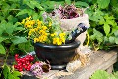 Healing herbs in mortar Stock Photos