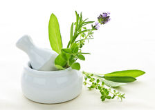 Healing herbs in mortar and pestle Stock Photos