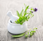 Healing herbs in mortar and pestle stock photo