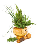 Healing herbs with mortar and pestle Royalty Free Stock Image