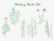 Healing herbs set Royalty Free Stock Images