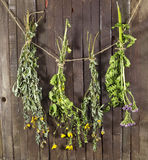 Healing herbs on string Stock Photography