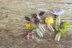 Healing herbs on wooden background Stock Image