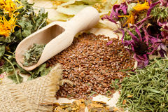 Healing herbs on wooden table, herbal medicine Royalty Free Stock Photos