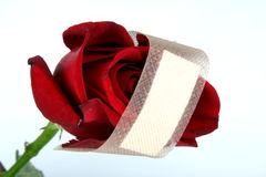 Healing Love. A metaphorical image of a red rose representing love with a bandage for healing its wound Stock Image