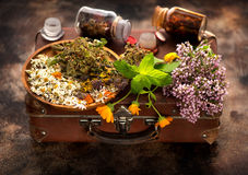 Medical herbs. Healing Medical herbs and flowers stock photo
