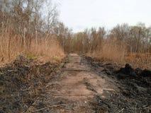 Healing spa mud and peat bog. Natural spa. Medical nature place Stock Image