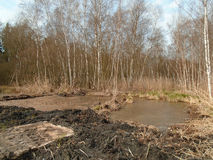 Healing spa mud and peat bog. Natural spa. Medical nature place Royalty Free Stock Photography