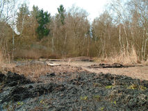Healing spa mud and peat bog Stock Images