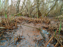 Healing spa mud and peat bog Royalty Free Stock Image
