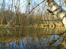 Healing spa mud and peat bog Royalty Free Stock Images