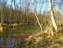 Healing spa mud and peat bog. Natural spa. Medical nature place Royalty Free Stock Images