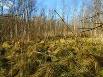 Healing spa mud and peat bog. Natural spa. Medical nature place Royalty Free Stock Photo