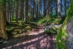 Free Healing Through Forest Bathing Shinrin-yoku Royalty Free Stock Image - 172966406
