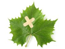 Healing tree leaf Stock Photo