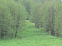 Health, beauty Spring. The first leaves on olhi.Vesnyanyy nastriy.Zelen grass. Fresh air and the joy of life. Still ahead. Enjoy living.Vyhlyad of the Hill stock photo