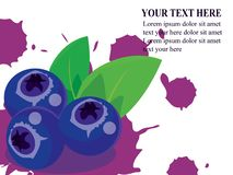 Health benefits blueberries vector royalty free illustration