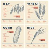 Health benefits of cereals, rice wheat oat and corn . Nutrition. Facts. Hand draw sketch vector set vector illustration