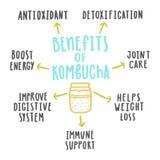 Health benefits of kombucha. Vector hand drawn illustration Royalty Free Stock Photos