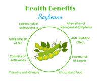 Health benefits of soybeans. Natural eco-friendly vegetarian nutrition. Flat style Stock Image