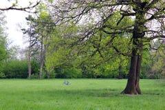Health, bike & garden. Garden in the Mogosoaia Palace Bucharest. Solitude bike and health Royalty Free Stock Photography