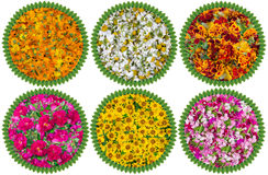 Health circles from medical flowers Stock Image