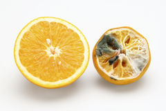 Health and disease. Ripe orange and orange with fungi over white background Royalty Free Stock Photos