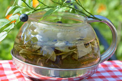 Health herbal tea of bilberry leaves in the kettle Stock Photo